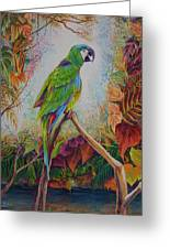Guacamayo Greeting Card