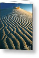 Guadalupe Dunes Greeting Card
