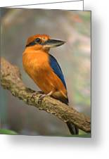 Guam Kingfisher Todiramphus Cinnamominus Greeting Card