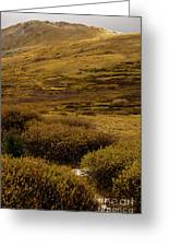 Guanella Pass Autumn Day I Greeting Card