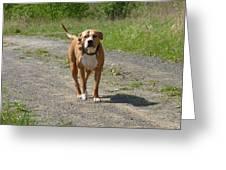 Guarding Pit Bull Dog Greeting Card