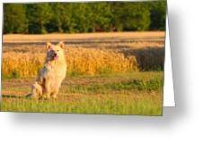 Guarding The Wheat Greeting Card