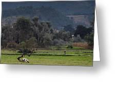 Guatemalan Pastoral Scene 2 Greeting Card