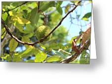 Guava Plant In Garden Of Eden Greeting Card