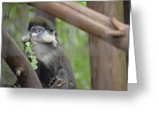 Guenon   4 Greeting Card