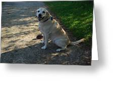 Guide Dog Greeting Card