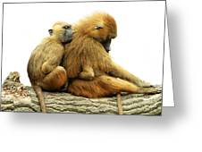 Guinea Baboons Greeting Card