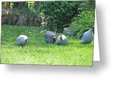Guinea Hens Greeting Card