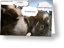 Guinea Pig Love And Bday Wishes Greeting Card