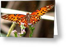 Gulf Fritillary 2 Greeting Card