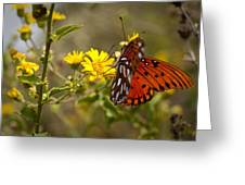 Gulf Fritillary Agraulis Vanillae Red Butterfly Greeting Card