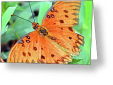 Gulf Fritillary Butterfly Cropped Greeting Card