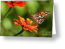 Gulf Fritillary Butterfly Greeting Card