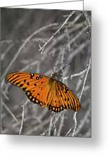 Gulf Fritillary Butterfly In The Brambles Greeting Card