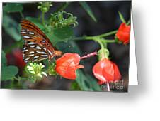 Gulf Fritillary Butterfly On Beautiful Flowers  Greeting Card