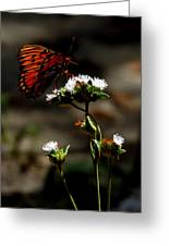 Gulf Fritillary Butterfly Too Greeting Card
