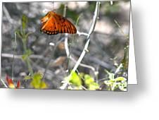 Gulf Fritillary Flying Greeting Card