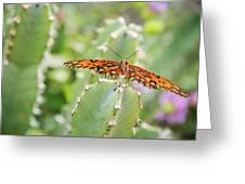 Gulf Fritillary On Cactus  Greeting Card