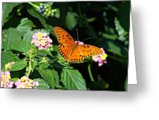 100_5412 Gulf Fritillary Greeting Card