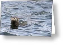 Gulf Islands Otter Greeting Card