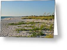 Gulf Of Mexico Beach Greeting Card by Steven Scott
