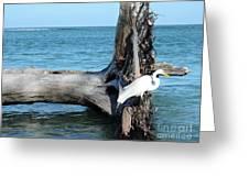 Gulf Shallows Greeting Card