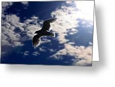 Gull Against Sky Fractal Greeting Card