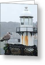 Gull And Lighthouse Greeting Card