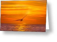 Gull At Sunrise Greeting Card