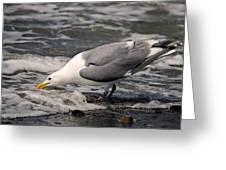Gull At Surfs Edge Greeting Card