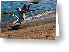 Gull Fight Greeting Card