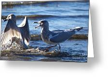 Gull Fighting Greeting Card