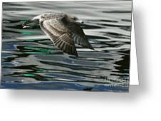 Gull Flight Greeting Card