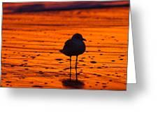 Gull Caught At Sunrise Greeting Card
