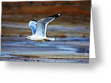 Gull Inflight Greeting Card