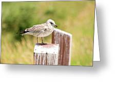 Gull On A Post Greeting Card