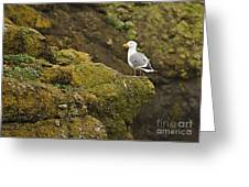 Gull On Cliff Edge Greeting Card