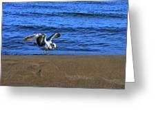 Gull On The Beach  Greeting Card