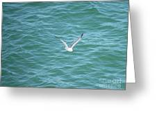Gull Over The Gulf Greeting Card