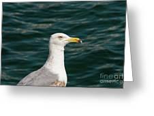 Gull Profile Greeting Card