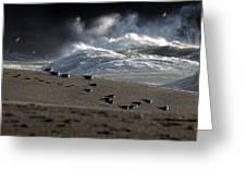 Gulls At Goat Rock Sundown Greeting Card