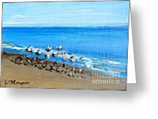 Gulls At Play Greeting Card