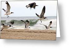 Gulls Away Greeting Card