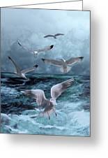 Gulls' Banquet Greeting Card