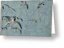 Gulls Greeting Card by James W Johnson