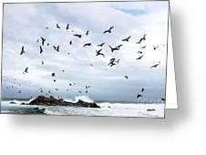 Gulls Of Carmel Greeting Card