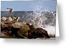Gulls Of The Jersey Shore Greeting Card