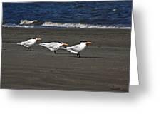 Gulls On Beach Greeting Card