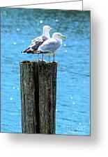 Gulls On Piling Greeting Card