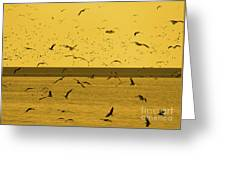 Gulls Orange Tint Greeting Card